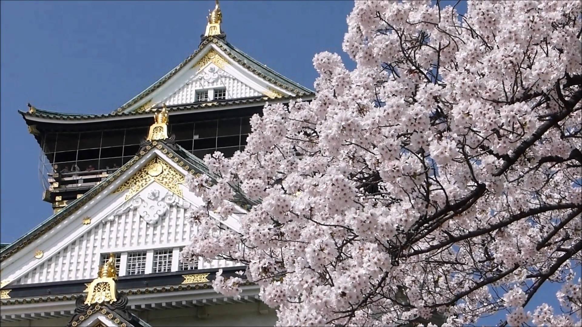 日本留学环境图片